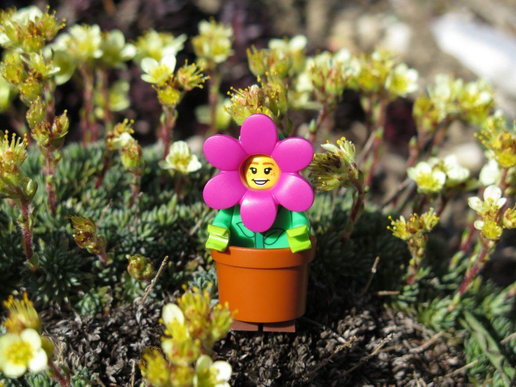 LEGO Minifiguren Serie 18 (71021) - Blumenmädchen entspannt | ®2018 Brickzeit