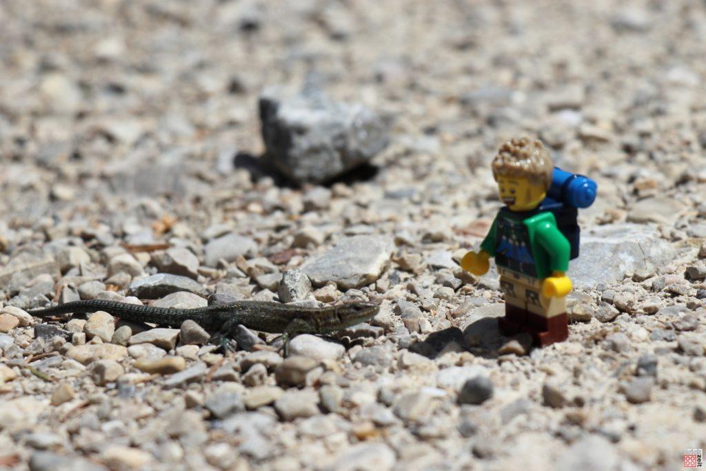 LEGO Wanderer trifft Eidechse | ©2020 Brickzeit