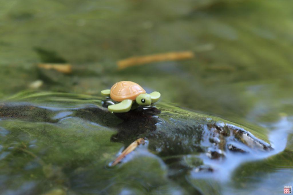 Schildkröte | ©2020 Brickzeit