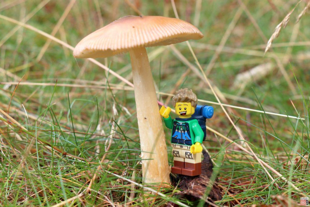 Großer Pilz auf der Wiese | ©Brickzeit