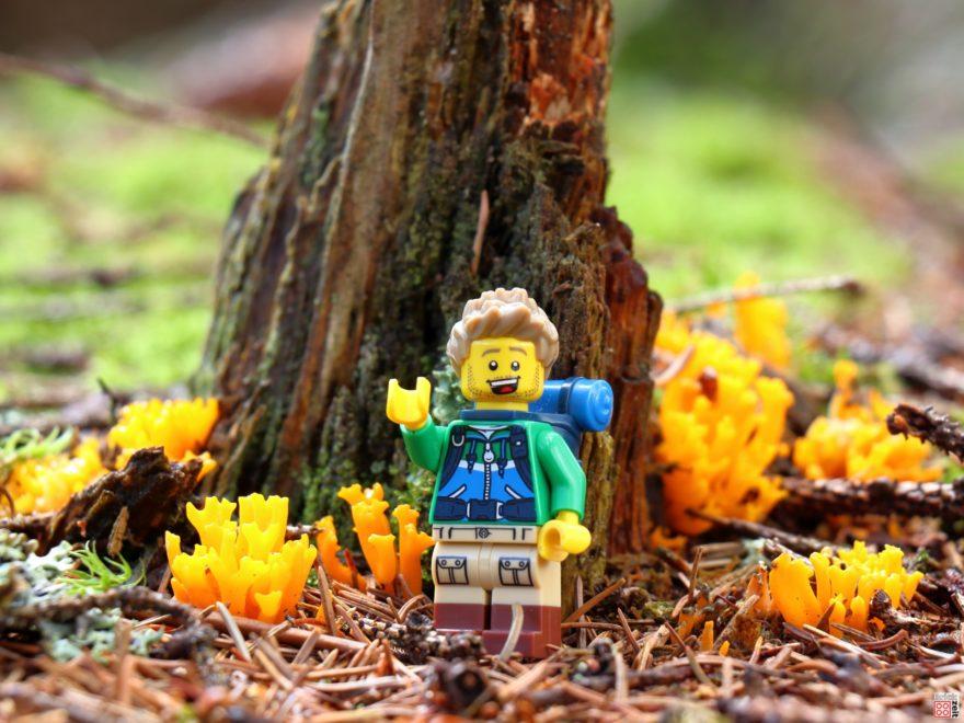 Pilze sammeln mit dem LEGO Wanderer ©| Brickzeit