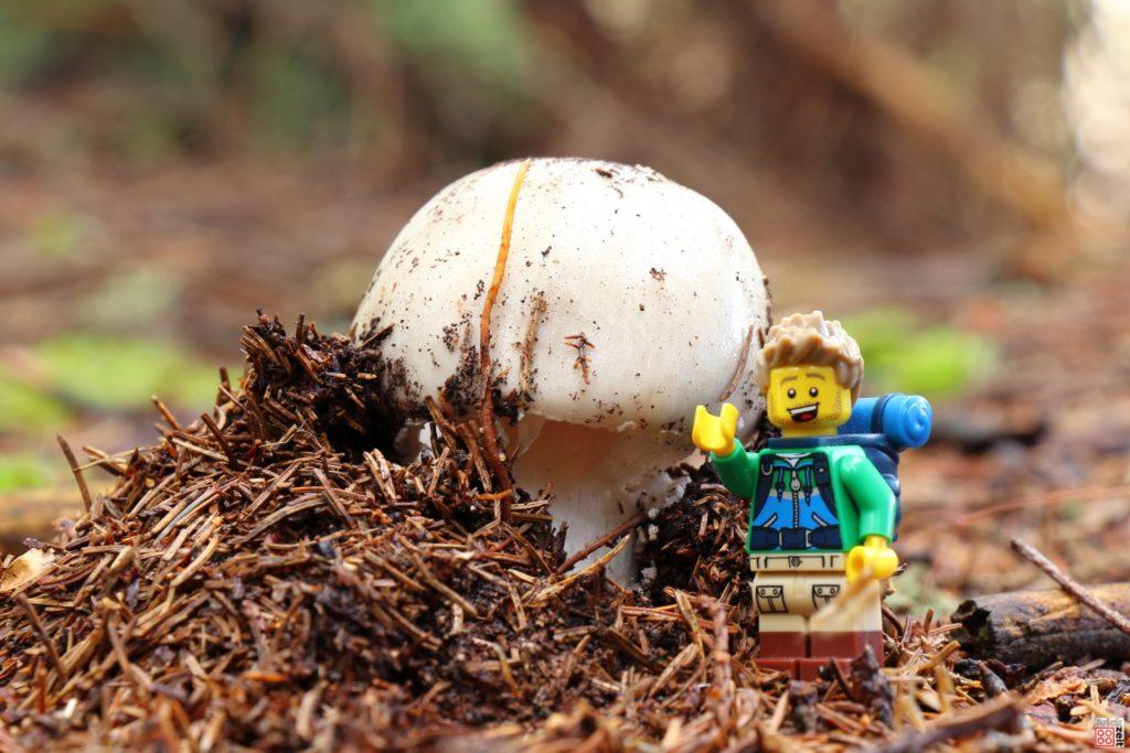 Ein neuer Pilz bahnt sich den Weg durch den Waldboden | ©Brickzeit