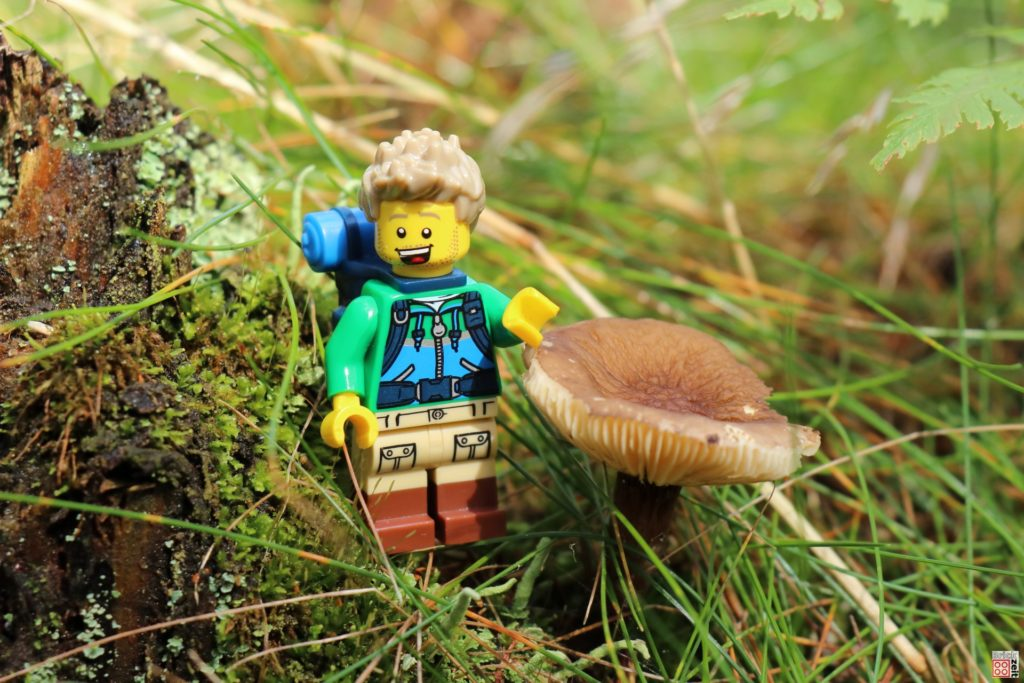 Pilz im Gras | ©Brickzeit