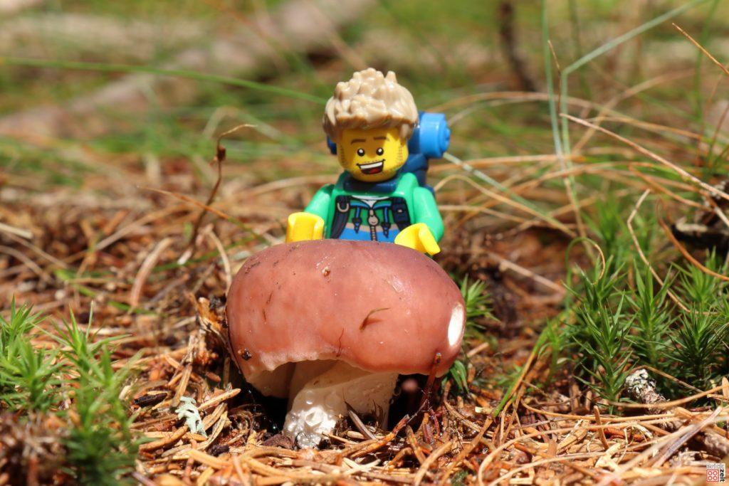 Schöner kräftiger Pilz | ©Brickzeit
