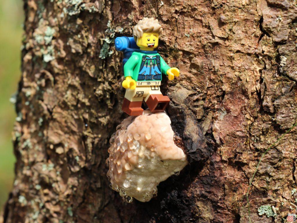 Baumpilz mit Wassertropfen   ©Brickzeit