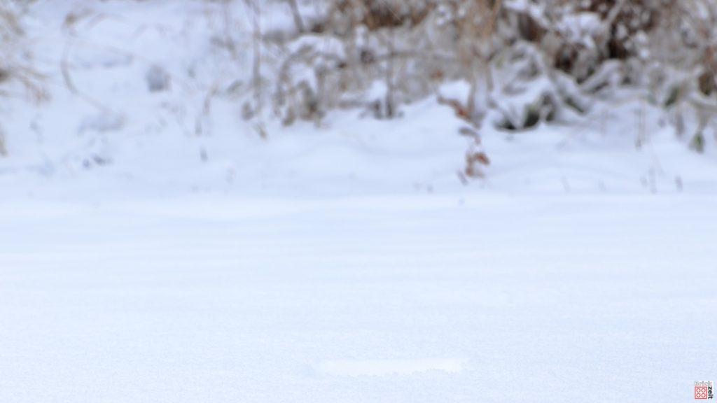 Hintergrund für den Snowspeeder | ©Brickzeit